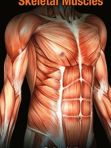 alternate image of A To Z Of Skeletal Muscles