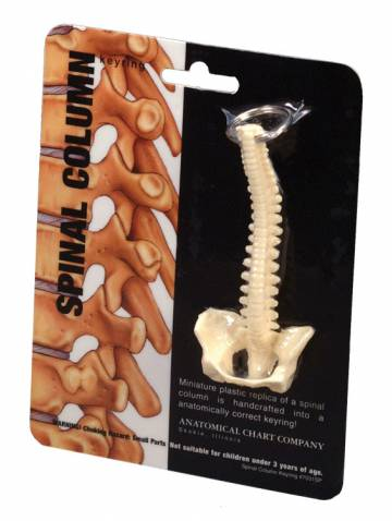 alternate image of Spinal Column Key Ring (7031Sp)