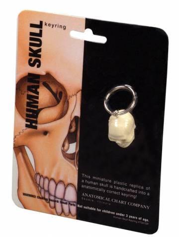 alternate image of Human Skull Key Ring (7041Sp)