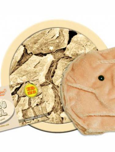 image of Giant Microbes  Skin Cell  Pd-0685