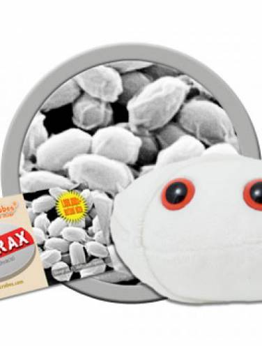image of Giant Microbes Anthrax