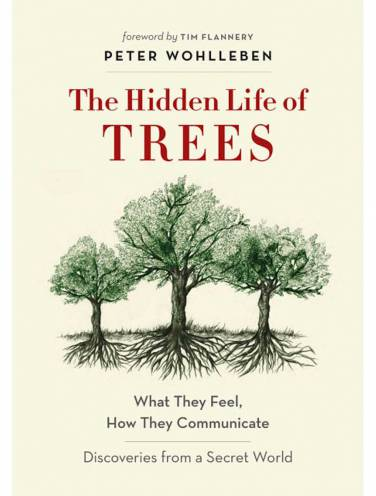 image of Hidden Life Of Trees