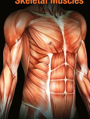 image of A To Z Of Skeletal Muscles